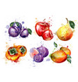 watercolor fruits set apple plum pear vector image vector image