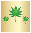 cannabis leafs marijuana background vector image