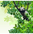 cartoon panda sitting on a tree in the jungle vector image vector image