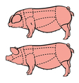 Cut of pig set Butcher diagram pork vector image
