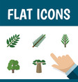 flat icon ecology set of jungle decoration tree vector image vector image