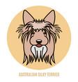 portrait of australian silky terrier vector image vector image