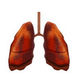 realistic detailed 3d human lungs internal organ vector image vector image