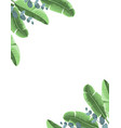 tropical background with banana leaves and vector image vector image