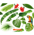 botany set of leaves and flowers tropical plants vector image