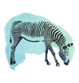 Colorful watercolor zebra cover vector image