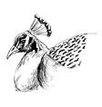 hand sketch head a peacock vector image vector image