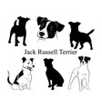 set jack russell terrier collection vector image vector image