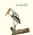 asian openbill birds on tree branch vector image