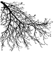 Dry tree dead tree with beautiful branch silhouet vector image