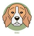portrait beagle vector image vector image