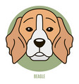 portrait of beagle vector image