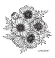 anemone flower drawing vector image vector image