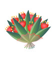 fresh red bloomy tulips bouquet in transparent vector image vector image