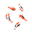 koi fish set isolated on a white background top vector image