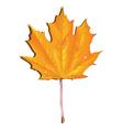 Maple autumn leaf vector image vector image