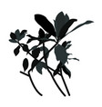 shape shadows from branches and leaves vector image vector image