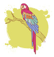 Parrot card vector image