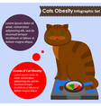 cats obesity vector image