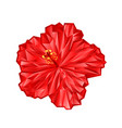 hibiscus pink flower polygons vector image
