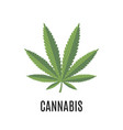 Cannabis sign isolated on white background