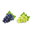 red and white table grapes wine grapes bunch vector image vector image