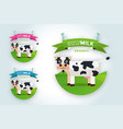 set of labels and icons for milk vector image vector image