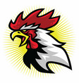 angry fierce rooster fighting sports mascot logo vector image