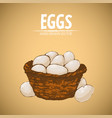digital detailed line art eggs vector image