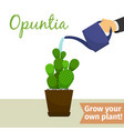hand watering opuntia plant vector image vector image