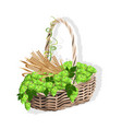 wicker basket with hops and malt vector image