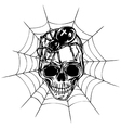 skull spider and web vector image