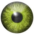 Eye iris texture vector image