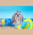 shih tzu dog vacation vector image