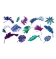 tropical colorful plants and flowers element set vector image