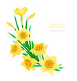 yellow realistic daffodils decorative vector image vector image