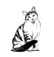 Hand sketch sitting cat vector image vector image