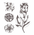 flowers hand drawing set vector image vector image