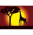 Savanna Giraffe Acacia vector image
