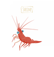 Shrimp cartoon vector image vector image