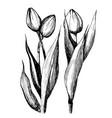 three tulips graphics vector image