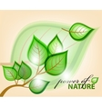 abstract nature background leaves vector image