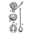 Pistil Flower Pod Sketch vector image vector image