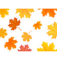 flying maple leaves on white background vector image