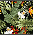 jungle flowers and leaves black background vector image vector image