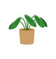 stromanpotted flat icon indoor plant flower vector image vector image