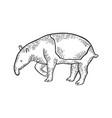 tapir animal sketch engraving vector image vector image