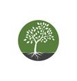 tree branch design vector image
