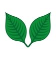plant leaves isolated icon design vector image vector image