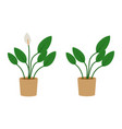 spathiphyllum potted flat icon indoor plant vector image vector image